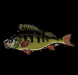 Fischer schaffen Lebensraum – Projekt Dorfbach Tägerwilen